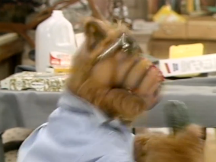 """ALF,"" Looking For Lucky"