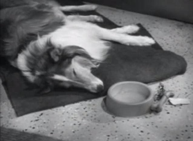"Lassie, ""A Christmas Story"""
