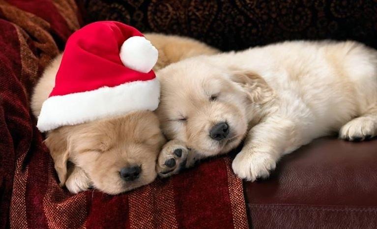 Ho ho ho, it's bed time